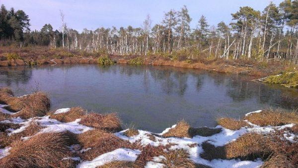 Wiedervernässung im Hochmoor